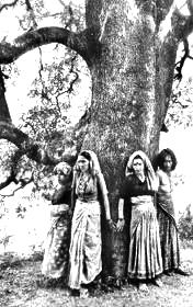 India's Chipko women, protecting a tree